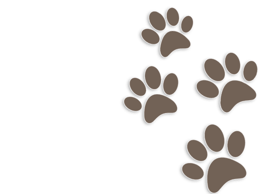 Pawprints graphic